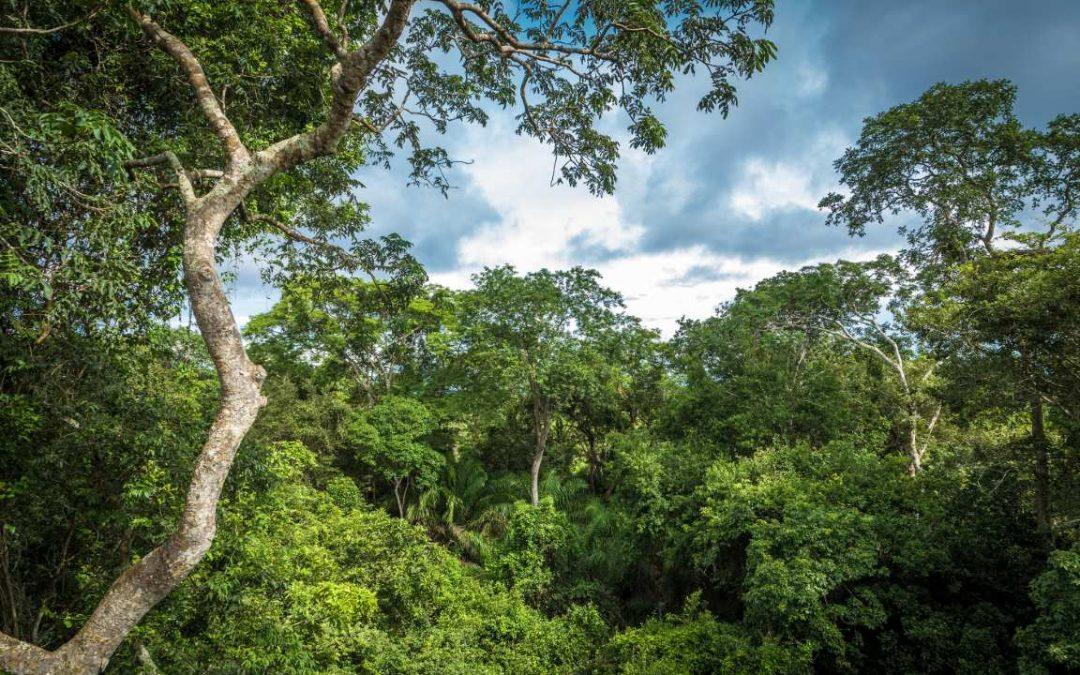 3 benefícios do contato com a natureza