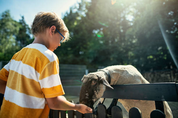 4 benefícios do contato com animais para crianças